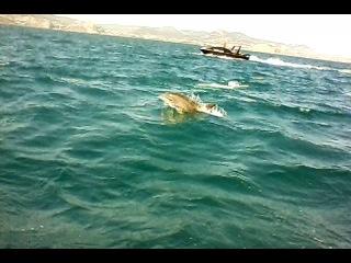 Дельфины, и беленький Альбинос