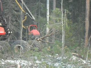 лесовалочная машина