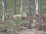 Медведь по имени Мишка)