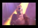 Маша и медведь - Песни из мультфильма