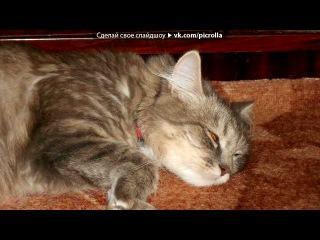 «Кошка Соня и попугай Яша» под музыку пособие по откармливанию кота... - кися- мяу, мяу. Picrolla