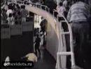 Слон-убийца из цирка