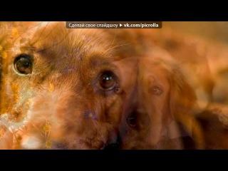 «Наши четвероногие друзья» под музыку Александр Розембаум - Лаки (песня про собаку). Picrolla