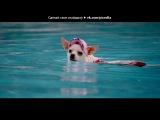 «крошка из беверли хилс !» под музыку DJ Bobo - Chihuahua (OST Крошка из Беверли-Хиллз 2 / Beverly Hills Chihuahua 2). Picrolla
