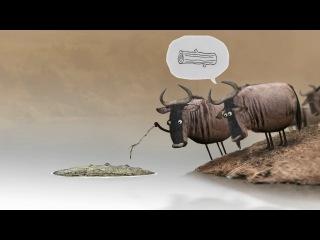 Wildebeest - Антилопа гну. Birdbox studio