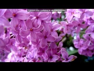 «Красивые Фото • fotiko.ru» под музыку Потап и Настя Каменских  - Чумачечая Весна (Daybrit remix) Супер ремикс 2011. Picrolla