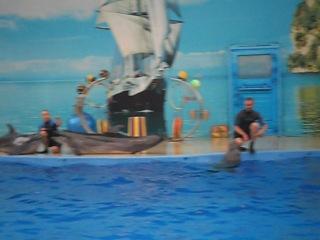 анапский дельфинарий немо. живой звук