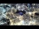 Развлечения голубых рыбок