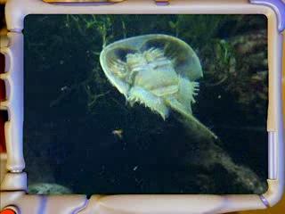 Приключения Ади в подводном мире - 33. Какая рыба самая древняя ?