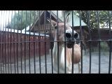 Однажды в зоопарке лошадь спела песню!!!