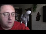 Говорящий попугай.