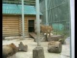 Прогулка по зоопарку В Нижнем...
