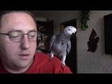 Попугай Григорий разговаривает с хозяином