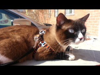 СЕГОДНЯ ГРЕЛСЯ\BASKED IN THE SUN\CAT GRISHA