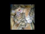«котики» под музыку ♥ Я ЛЮБЛЮ ТЕБЯ ♥ - Привет котёнок, ты далеко, без тебя мне очень нелегко......Да я знаю что ты любишь меня, но увидиться пока что нам не судьба. Мы живём далеко, но не беда, Если мы захотим, то будем вместе навсегда.......... Picrolla