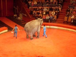 Немецкие слоны на арене харьковского цирка