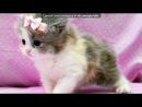 «котики» под музыку Та Самая Песня.. - про кошек...