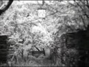Андалузский пёс (С. Дали и Л.Бюнюэль)