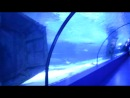 В тоннеле с акулами 2