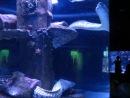 Анталия, аквариум с экзотическими рыбами. Мурены.