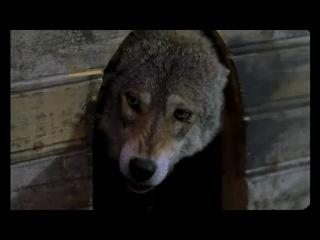 Кристина Прилепина - Волчья доля