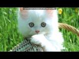 «котики» под музыку Светлана Копылова - Про КОТА. Не обижайте кошек и котов грустная песня((((. Picrolla