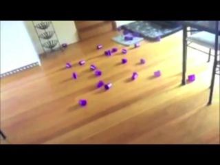 Приколы с котами :) очень смешно!!!