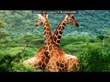 «Африка» под музыку ейс вентура - песня из Эйс винтура). Picrolla
