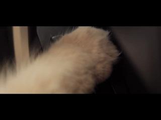 Toyota Corolla 2013 - любовь кошки