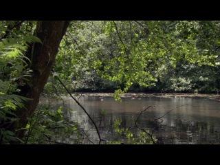 BBC: Планета Земля / Planet Earth - 10 серия - Сезонные леса / Seasonal Forests