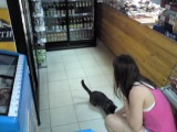 Кот для рекламы. Дрессированный кот, куклачев отдыхает, прикол, животные, ржачь, дрессировка, умный кот, трюки, жжет, коты, котя