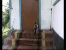 Кошка Юлька которая сама открывает дверь .