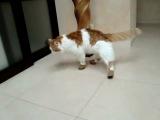 Кот, котик, прикол, ржака, до слез, я плакал, ботинки, кот и пес :)