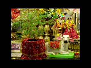 ТУЛАСИ-ПУДЖА ~ ПОКЛОНЕНИЕ ШРИМАТИ ТУЛАСИ ДЕВИ ~ Tulasi-Puja ~ Worshiping of Srimati Tulasi Devi