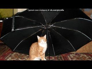 «Наффо Яффо» под музыку Детские песни - про кота!=))) ухаха..мама,он взорвался!!)))). Picrolla