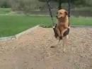 собака на качелях