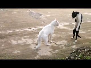 Cмешные коты. Сумасшедший кот-каратист