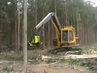 Как японцы валят лес.