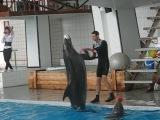Дельфинарий Набережные Челны-12