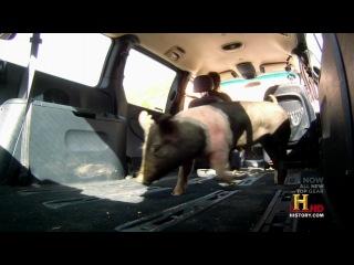 Top Gear US 2х12 Континентальная переправа Топ Гир Америка Jetvis Studio JuiceTime