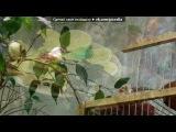 «вова и тропические бабочки 10.06.2012» под музыку Испанская музыка - Испанкая гитара - очень красиво. Picrolla