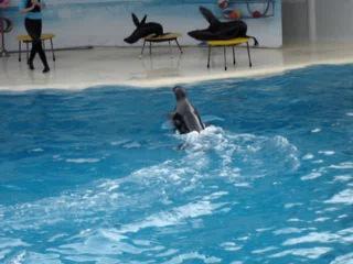 В дельфинарии Коктебеля 3