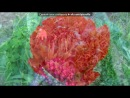 «Цветы» под музыку релаксация  - небесные цветы. Picrolla