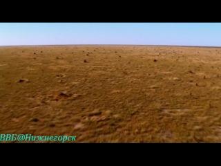 BBC «Ребятам о зверятах - Щенок Дина» (Документальный, 2004)