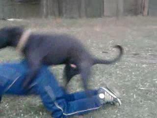 перика трахает собака