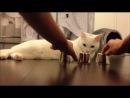 Умный кот его не проведешь