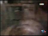 Красная плесень - Тараканы (Без мата)