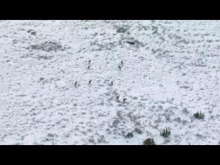 BBC: Застывшая планета (Frozen Planet) 4 серия
