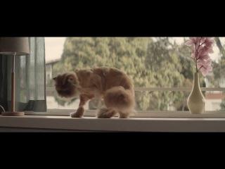 Кот,_который_любил_кататься_в_Toyota_Corolla