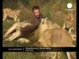 львы и тигры общаются только с людьми у которых чистая муладхара
